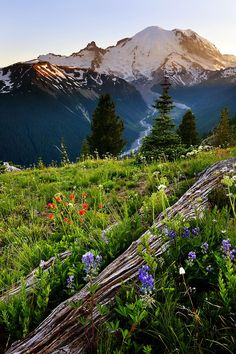 Visit Mount Rainier National Park.I want to go here one day.Please check out my website thanks. www.photopix.co.nz
