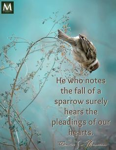 He who notes the fall of a sparrow surely hears the pleadings of our hearts. - Thomas S. Monson