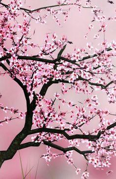 pretty cherry blossom tree