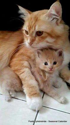 Kitten loves ist Mom