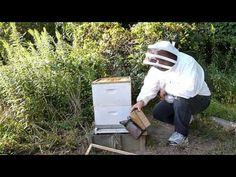 Performing an ApiGuard Varroa Mite Treatment - YouTube