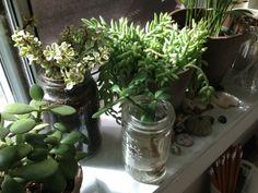 - ̗̀ plants are friends ̖́- Green Aesthetic Tumblr, Pale Tumblr, Plant Aesthetic, Nature Aesthetic, Aesthetic Bedroom, Plants Are Friends, Indoor Plants, Ivy Plants, Shade Plants