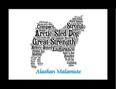 Traits of the Alaskan Malamute The Alaskan Malamute was first described living among the native Inuit people known as the Mahlemuts, who lived along Norton Sound on Alaska's northwest coast. They help