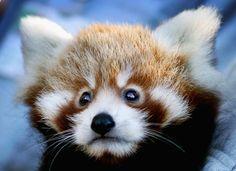 Fotos de animales de la semana: especial imágenes de cachorritos (FOTOS)