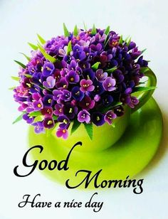 Good Morning Flowers Quotes, Good Morning Beautiful Flowers, Good Morning Happy Sunday, Good Morning Roses, Good Morning Beautiful Images, Good Morning Cards, Good Morning Images Hd, Good Morning Greetings, Morning Pictures