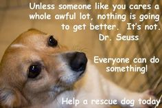 rescue a dog today Rescue Dogs, Animal Rescue, Dog Sounds, Prayer List, Toy Puppies, Pit Bull Love, Animal Posters, Someone Like You, Dog Quotes