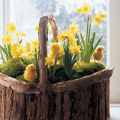 Set inside a rustic boat-shaped birch basket, this cheerful yellow hilltop vista is a breath of fresh air. You can practically hear the chicks peeping and feel the warm sunshine on your face. We contoured the moss and the soil below it (both are inside a plastic liner) to effect a more realistic look, and we planted the daffodils ('Small Talk' and 'Tete-a-Tete') individually, rather than in clumps, to make the flowers appear as if they are growing naturally.