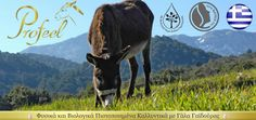 BIO-FARMA PROFEEL Donkey, Milk, Organic, Cosmetics, Animals, Animales, Animaux, Donkeys, Animal