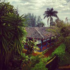 El Bosque del Samán / Colombia de Una