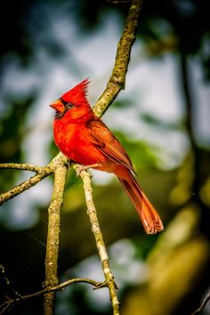 Birds GALLERY - Google+