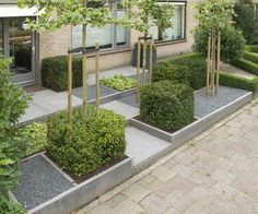 Deze voortuin is opgebouwd uit vakken van 1x1 m. De strakke taxus blokken benadrukken de vormgeving.