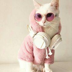Gatissima @cosmopolitan_de  #gatos #cats #gato #cat #pets #GostoDisto