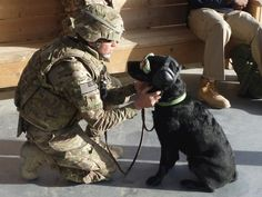 Zoe the therapy dog, spreading her love to our troops in Afghanistan.