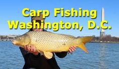 A fun day carp fishing at the tidal basin in Washington, D. USA in front of the Jefferson Memorial. Caught a bunch of carp and small catfish on boilied fee. Carp Fishing Videos, Ice Fishing Tips, Carp Fishing Rigs, Pike Fishing, Fishing Knots, Fly Fishing, Small Catfish, Catfish And Carp, Dynamite Baits