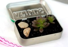 Guest Post: DIY Mini Succulent Garden In An Altoids Tin - Free People Blog