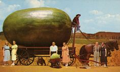 That's one big watermelon. From MOTHER EARTH NEWS magazine.