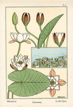 Eugène Grasset (Swiss, 1841-1917). Water lily.