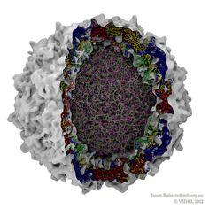 Poliovirus supercomputer simulation IBM Blue Gene Q VLSCI, 0.1 microseconds.