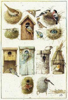 Nids et Homes d'Oiseaux - Illustrations (c) Marjolein Bastin