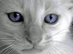 Purple-blue eyes