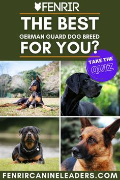 Ever wanted to bring a German guard dog into your home but never sure which is right? Take our quiz and see which breed is the best fit and more on the Fenrir Canine Show and Fenrir Canine Leaders! Best Guard Dog Breeds, Best Guard Dogs, Best Dogs, Dog Breed Quiz, Rottweiler Dog Breed, German Dog Breeds, Family Dogs, German Shepherd Dogs, Dog Care