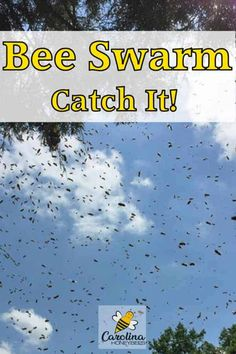 Tips and ideas for attracting honey bee swarms to a swarm trap or bait hive. This is a great way for beekeepers to get free bees. Honey Bee Swarm, Honey Bees, Bee Hives For Sale, Bee Quotes, Bee Hive Plans, Shade Perennials, Shade Plants, Shade Grass, Bee House