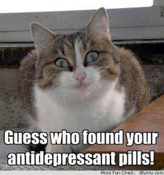 Pills Cat