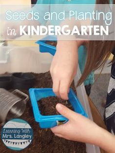 Learning with Mrs.Langley: Seeds and Planting in Kindergarten: WWWW Kindergarten Social Studies, Kindergarten Readiness, Kindergarten Learning, Preschool, Hands On Learning, Hands On Activities, Primary Classroom, Classroom Ideas, Types Of Education
