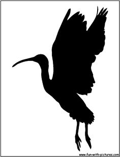 Scarlet Ibis Silhouette