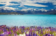 Download New Zealand Lake Tekapo 4k wallpaper for free. Come and find more 4k Ultra hd wallpapers of Nature