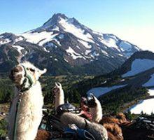 Llama Backpacking