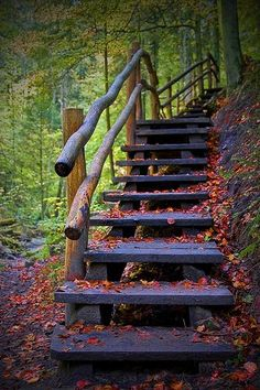 I would love to have a place like this to walk as my quiet place.
