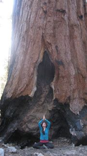 The Complete Yoga Plus Blog- Yoga at Sequoia National Park- www.LauraYOga.webs.com