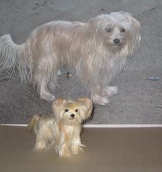 Needle Felted MORKIE Custom Dog Portrait Sculpture by GERRY Poseable Lifelike