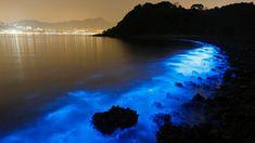 Biolumineszenz: Das Licht der Finsternis - SPIEGEL ONLINE - Wissenschaft