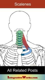 Client Description People complain of nagging pain in the upper or mid back, just inside the base of the shoulder blade. They have trouble determining what causes it or what to do for relief. Shoulder Pain Relief, Neck And Shoulder Pain, Neck Pain, Back Pain Exercises, Stretching Exercises, Neuromuscular Therapy, Massage Therapy Rooms, Fascia Lata, Gluteus Medius