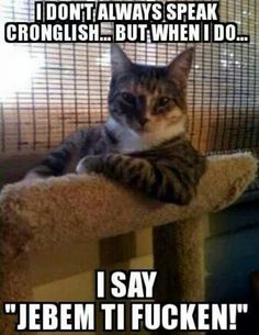 Animal Memes: The Most Interesting Cat in the World - Right In Your Face - World's largest collection of cat memes and other animals I Love Cats, Cute Cats, Funny Cats, Funny Animals, Cute Animals, Silly Cats, Funniest Animals, Funny Stuff, Dog Cat