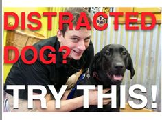 Is Your Dog Easily Distracted? Have You Tried This?