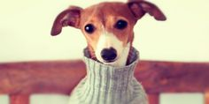 DIY Dog Sweaters and Accessories Animals And Pets, Cute Animals, Dog Pattern, Dog Agility, Dog Sweaters, Dog Dresses, Pet Clothes, Dog Clothing, Dog Coats
