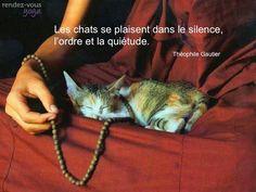 Serai-je un chat ? #citation #zen #peace