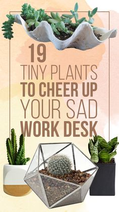 19 tiny plants to cheer up your sad work desk. (And also pretty planters.) decor professional work women 19 Tiny Plants To Cheer Up Your Sad Work Desk Office Plants, Dorm Plants, Kabine, Cheer Up, My New Room, Indoor Plants, Small Plants, Green Plants, Go Green