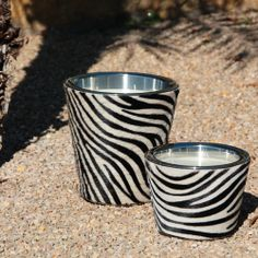 Go wild with Baobab Collection