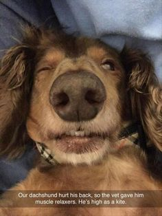 Funny, Memes, Pictures: animal-pictures-23-1 #dogsfunnyfaces