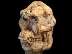 Is 'Little Foot' a human ancestor—or just a distant cousin?