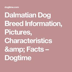 Dalmatian Dog Breed Information, Pictures, Characteristics & Facts – Dogtime