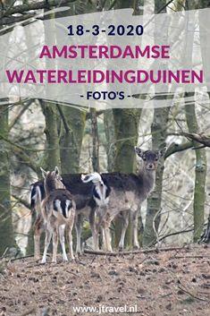 Ik maakte een wandeling in de Amsterdamse Waterleidingduinen en zag slechts een paar damherten. Het was dit keer ontzettend rustig. Geen vos gezien en slechts 17 damherten. Mijn foto's zie je hier. Kijk je mee? #awd #damhert #wandelen #hiken #natuur #jtravel #jtravelblog #fotos