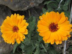 Flores de Los Olmos