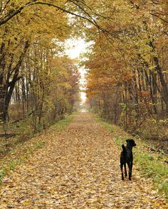 Walking trails on the north side of South Lyon Michigan. South Lyon Michigan, Tree Lined Driveway, War Dogs, Amnesia, Summer Landscape, Dog Memorial, Key West, Just In Case, Places Ive Been