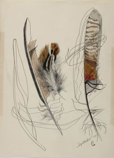 Group of Feathers, Shirley Craven, 1957. Pencil and watercolour on paper. The graphic quality and distinctive layered composition reflect a designers' eye. Shirley Craven's innate feling for colour is also very much apparent even at this early stage of her career © Private Collection/ Ferens Art Gallery, Hull Museums