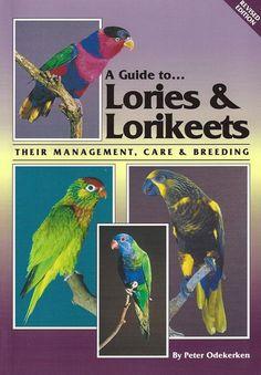 a guide to lories & lorikeets   Lories en papegaaien advertenties